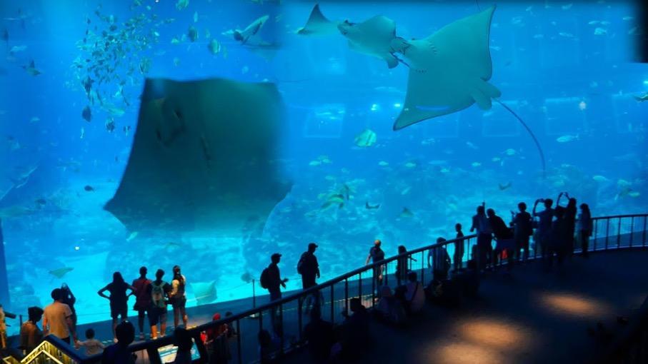 aquarium in sg